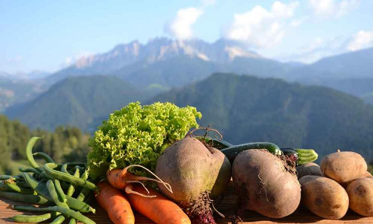Organic vegetables from the mountain farm